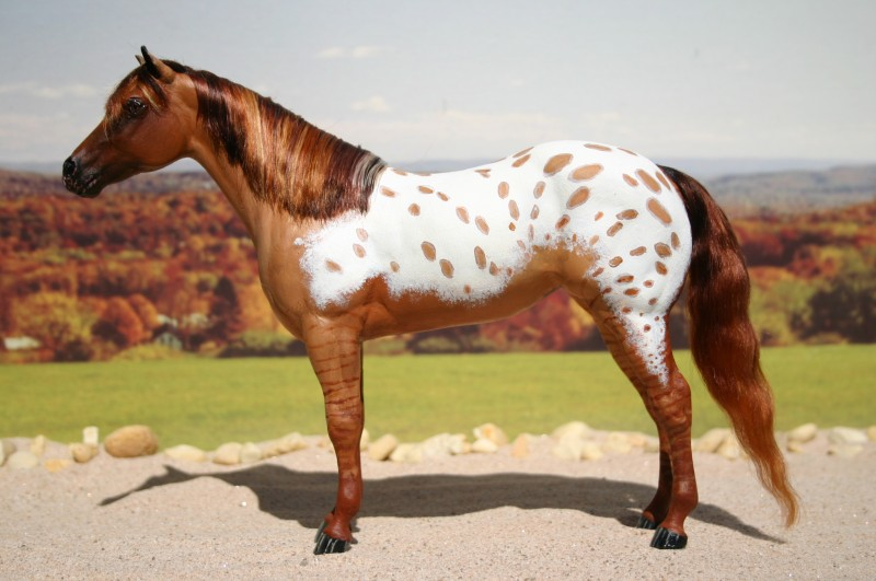 Red Dun Appaloosa